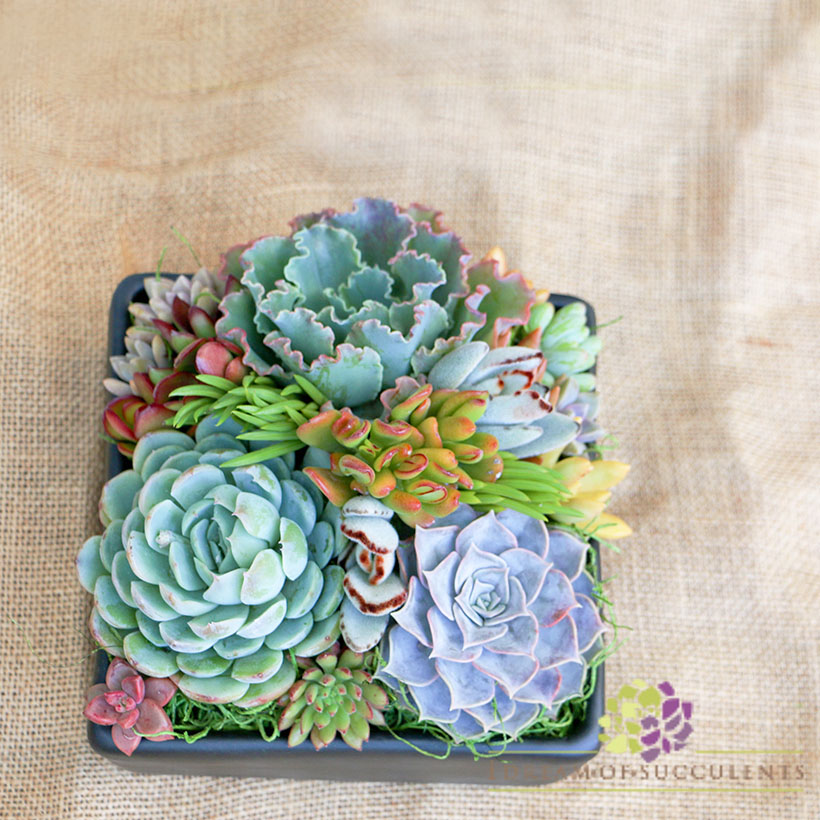 mothers day succulents