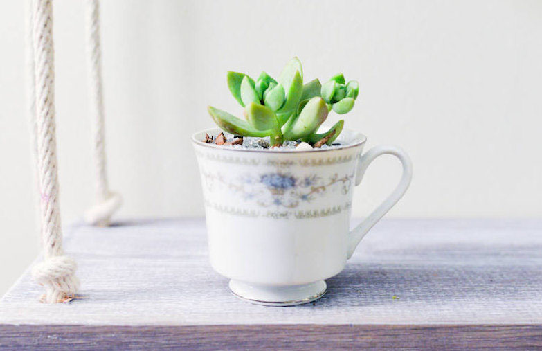 mother's day succulent tea cup